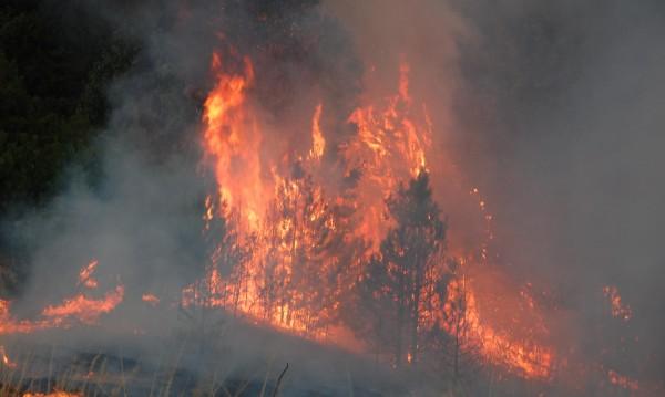 Пожар изпепели 200 дка борова гора в Гроздев дол