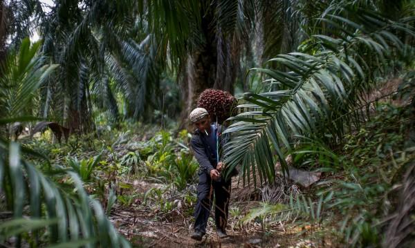 """У нас палмовото масло – """"деликатес"""", европейците не го близват"""