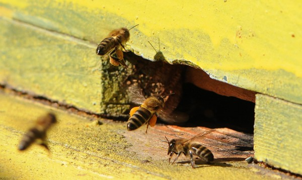 Пчелари на протест заради опасни пестициди