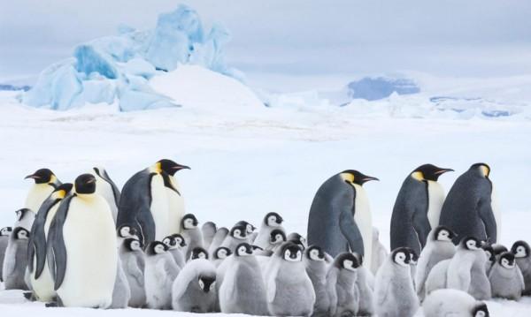 """Отблизо с пингвините в """"Императорът"""""""