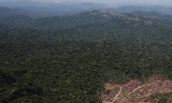 Преброиха дървесните видове на Земята – те са 60 000