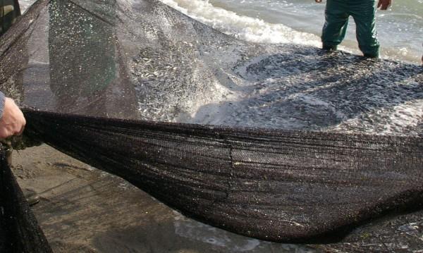 """Намериха бракониерски мрежи с риба в """"Тича"""""""