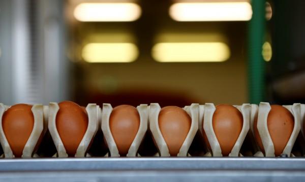 Евтини яйца от Полша и Румъния заляха пазарите ни