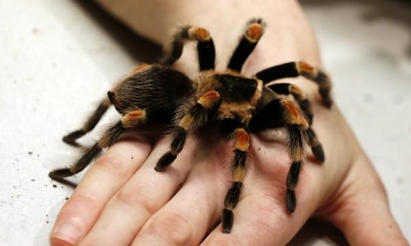 """В Австралия откриха """"столицата на паяците"""""""