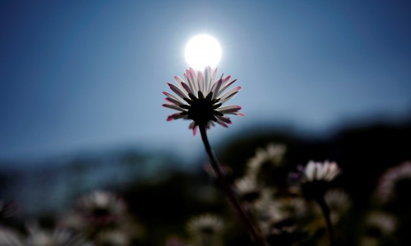Пролетта си идва утре: Ще е тихо, слънчево, топло