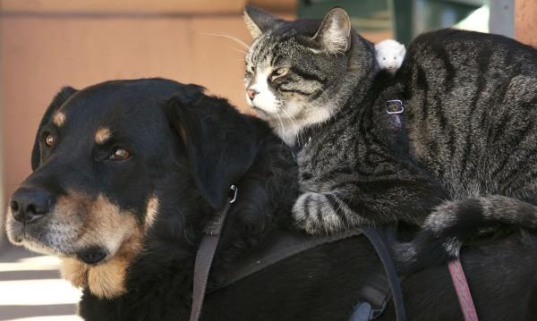 Омаловажаването на насилието над животни –  престъпно