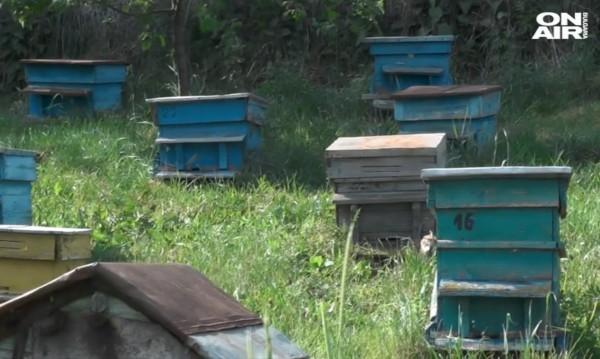 Масов мор на пчели във Видинско, пчеларите на протест