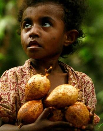 Индийско орехче – ценен източник на фибри