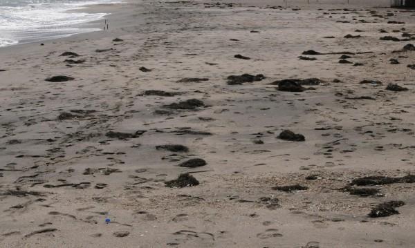 """Проверка установи: Дюните на """"Къмпинг Оазис"""" са цели"""