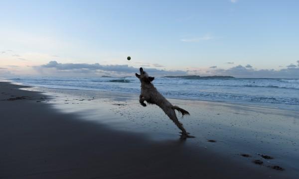Без кучета по плажа в Несебър – туристът на първо място