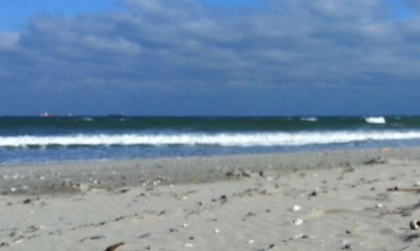 Откриха два мъртви делфина на брега в Балчик
