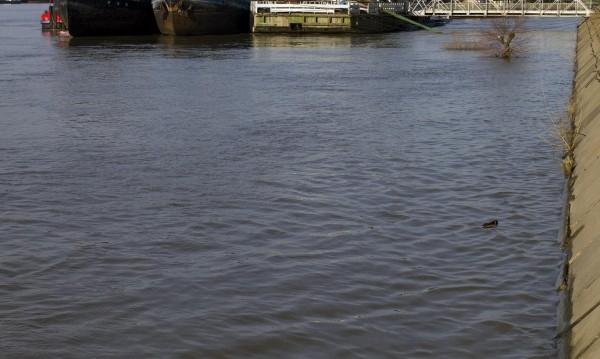 Нефтено петно е установено в Дунав край Козлодуй