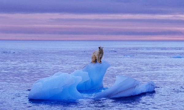 Арктика се топи, нали? Учени откриха причината