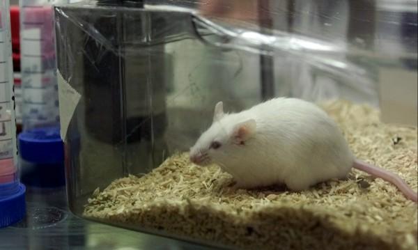 Доказано: Мишки могат да се възпроизвеждат в космоса