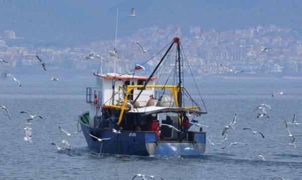 Опасни гемии развеждат туристи по морето