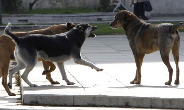 Жена преби до смърт куче с мотика във Видинско