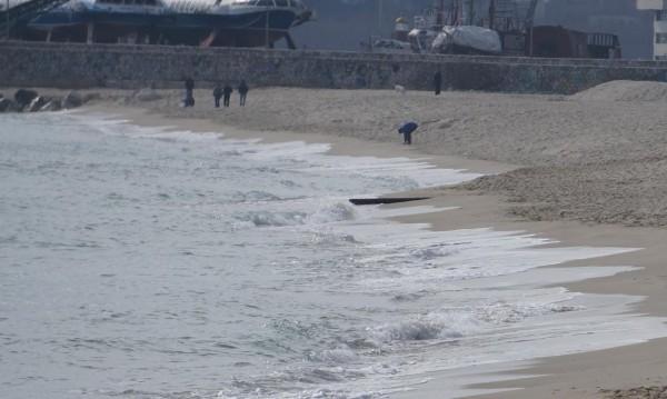 Удавени домашни животни изплуваха на плажа в Аспарухово