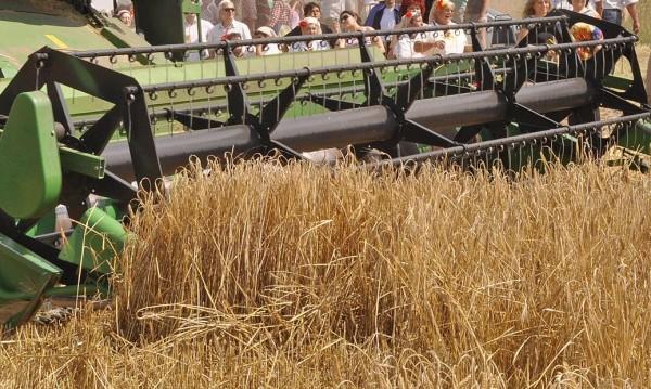 Реколтата от пшеница ще е добра, чакат се 5 млн. тона