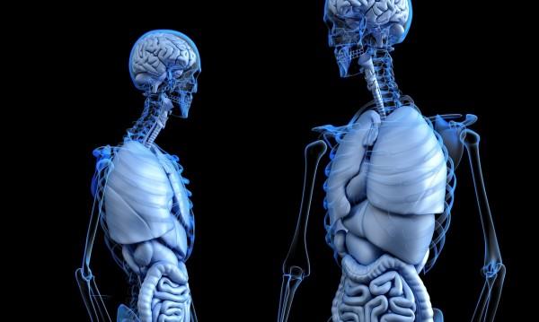 Любопитни факти за човешкото тяло