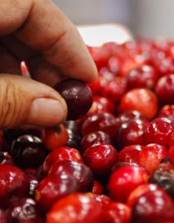 Червени боровинки - силен антиоксидант