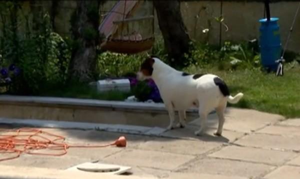 Убиха кучето на Катето Евро с въздушна пушка