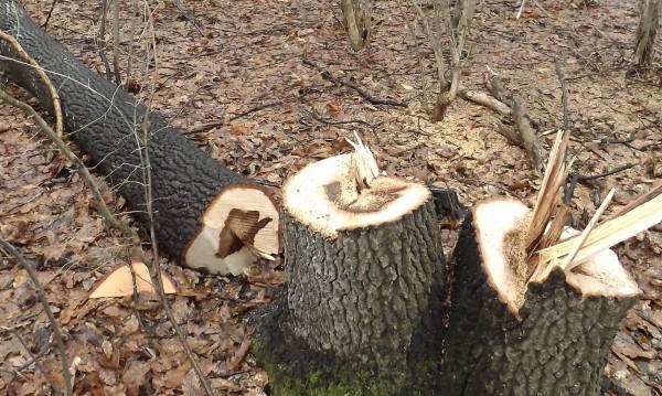 Мъж загина при добив на дърва в Кърджалийско