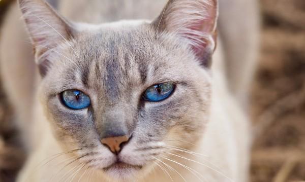 6 сигурни знака, че вашата котка е луда по вас