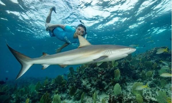 Нина Добрев: Да плуваш сред акули