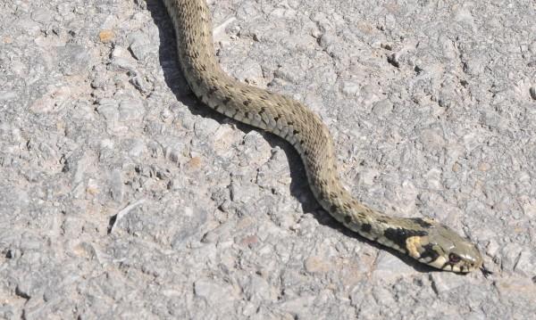 Смолянско: Змии налазиха детски център и магазин за дрехи