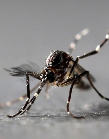 Какво да правим при ухапване от насекомо?