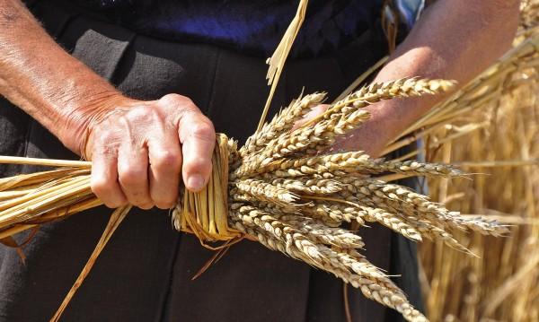 Пожар изпепели 15 декара пшеница край Силистра