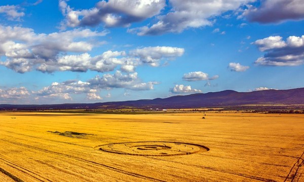 Появиха се мистериозни житни кръгове край София