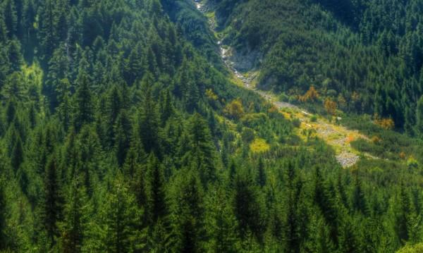 Издирват жена, изгубила се в Лозенска планина
