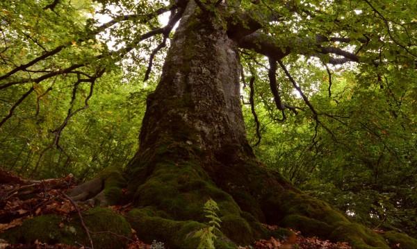 """Вековните гори в """"Централен Балкан"""" - включени в ЮНЕСКО"""