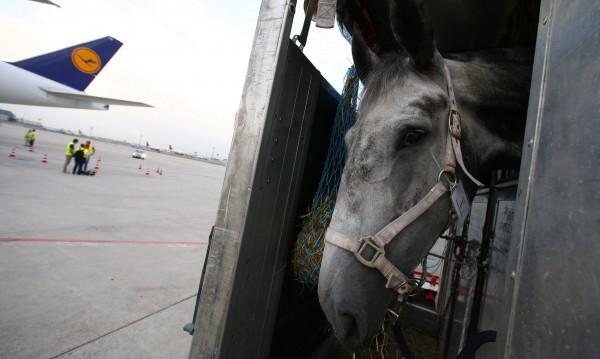 """На летище """"Кенеди"""" има специален терминал за... животни"""