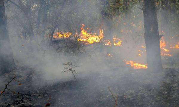Горски пожар бушува в землището на Стара Кресна