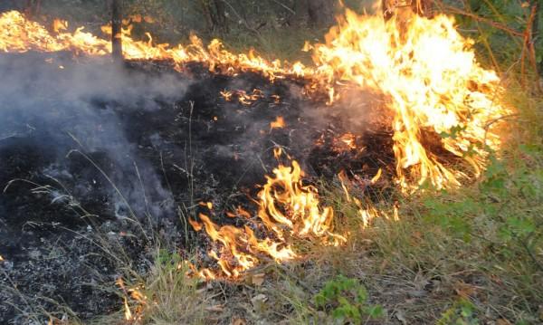 Военни се включиха в гасенето на пожара край Стара Кресна