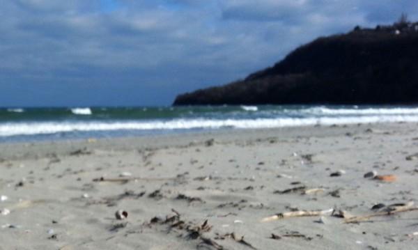 Само за седмица: Морето изхвърли осем трупа на делфини