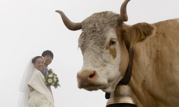 Сватба по швейцарски: Чужденците бол, местните почти ги няма