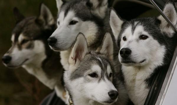 Кучета, бъдете хора! В цяла Варна няма ваксина срещу бяс!
