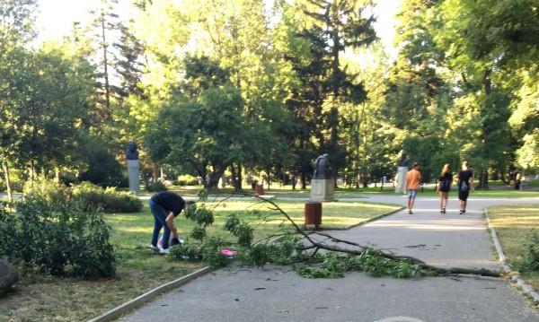 Клон падна върху майка с дете в Борисовата градина