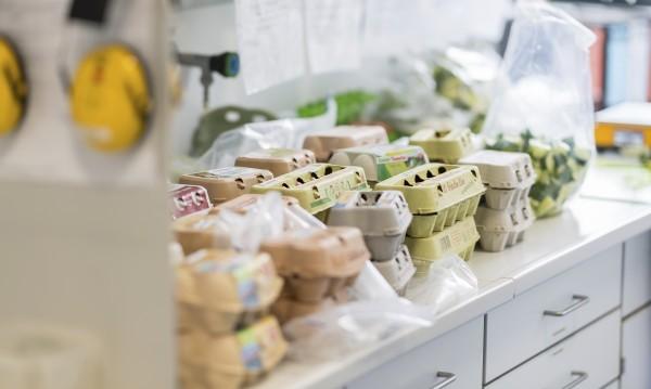 Хронология на кризата със заразените яйца в ЕС