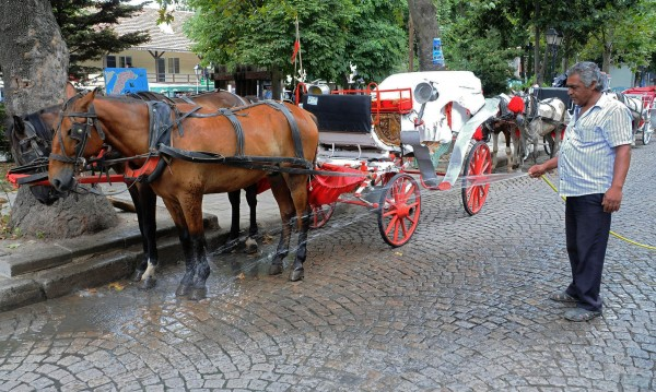 РЕТА: България да забрани впрягането на коне по морето!