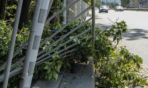 Режат ускорено сухи и опасни дървета из София