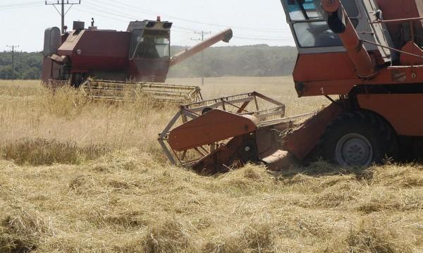 Рекорд: Чакаме 6 млн. тона реколта от пшеница