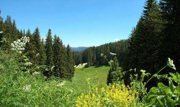 Овчар загина в Стара планина, катастрофирал на черен път