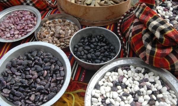 Земеделие: След житото и фасулът с отлична реколта