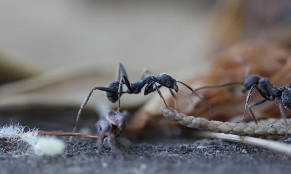 Как да намалим ухапванията от насекоми?