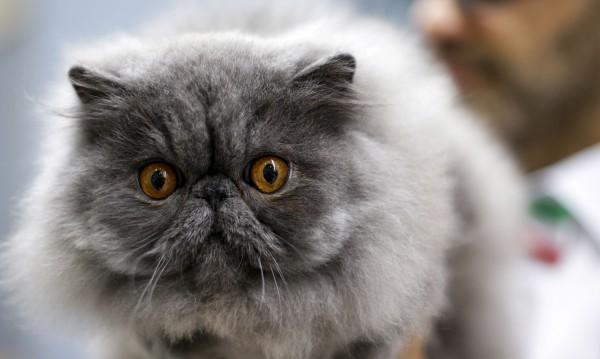 Собствениците на котки кръшкат най-често