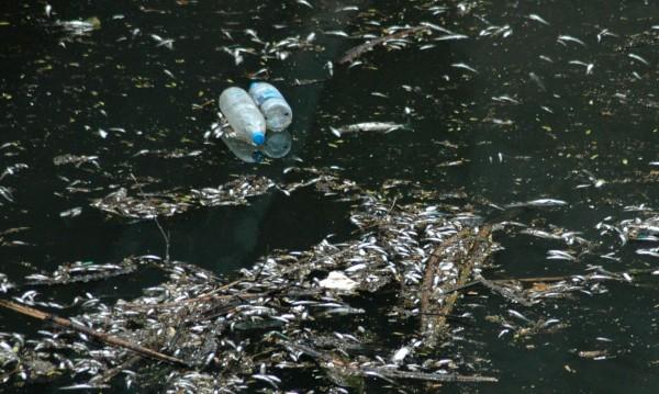 Янтра - кафява заради планктон и микроводорасли
